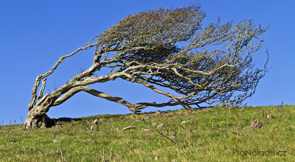 krivy-strom