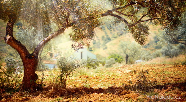 strom-splnenych