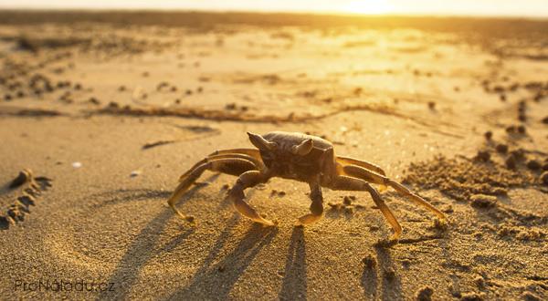 crab-effect