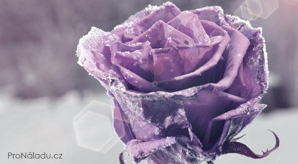 frozen-flower