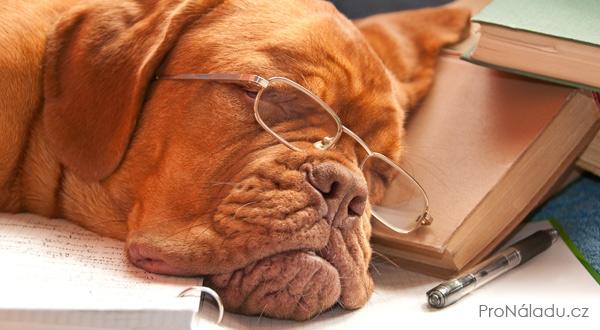 faf514d2a91 Jednou ke mně přišel unavený pes…